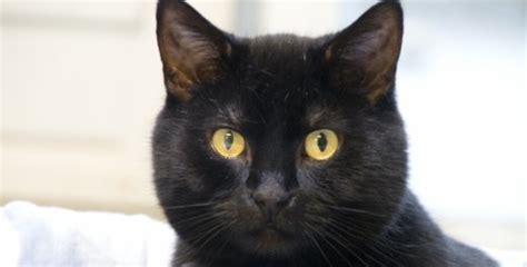 dierenasiel blijft zitten met zwarte katten kloptdatwel