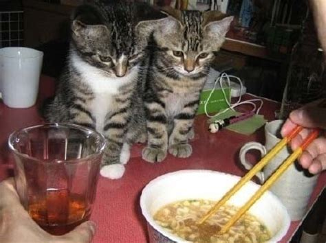 funny animals begging  food pictures