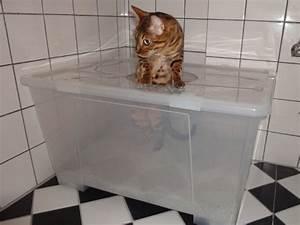 Schrank Fuer Katzenklo : ideales katzenklo schrank selber bauen schrank bauen galerien schrank site ~ Frokenaadalensverden.com Haus und Dekorationen
