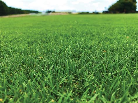 Grasses For Lawn, Pasture & Landscaping