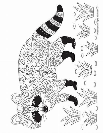 Coloring Raccoon Adult Printable Adults Fall Kleurplaten