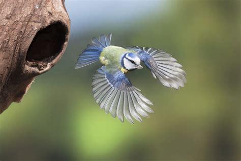 how to identify birds in flight