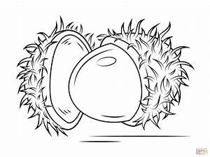 Disegno di Rambutan aperto da colorare | Disegni da ...