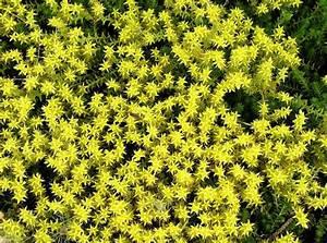 Bodendecker Blühend Winterhart Sonnig : bodendecker f r sonnige standorte mein sch ner garten ~ Frokenaadalensverden.com Haus und Dekorationen