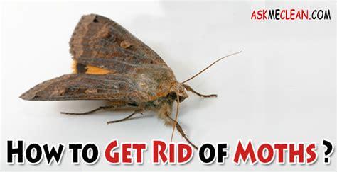 rid  moths