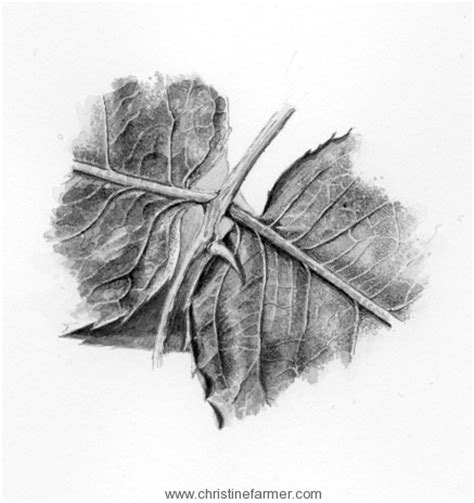 leafcutter bees  brush  ink christine farmer