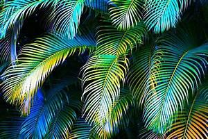Palm Leaves In Blue Photograph by Karon Melillo DeVega