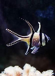 Poisson Aquarium Eau Chaude : notre histoire 2dnaquario ~ Mglfilm.com Idées de Décoration