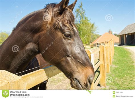 beautiful  strong horse stock photography image