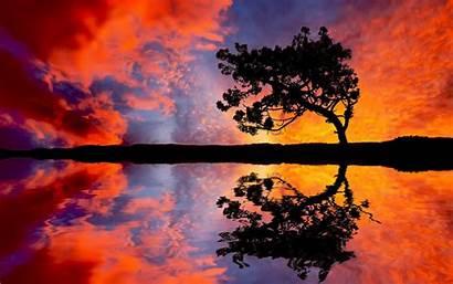 Sunset Tree Desktop Wallpapers Pc Mobile Reflection