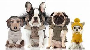 Milk And Pepper : frenchie dog clothes uk ~ Orissabook.com Haus und Dekorationen