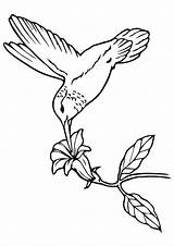 Hummingbird Coloring Nectar Pages Wood Printable Sipping Burning Patterns Carving Projects Beginners Bird Humming Easy Momjunction Project Books Categories Cat sketch template
