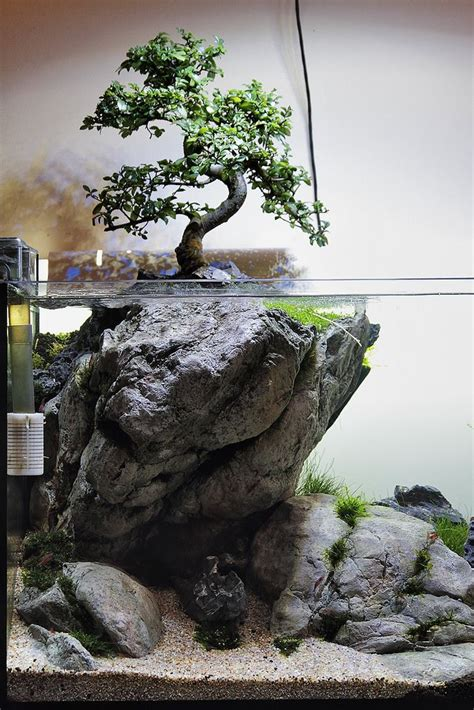 bonsai paludarium google search aquascaping