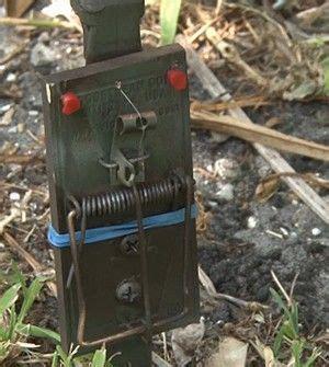 ideas  survival weapons  pinterest