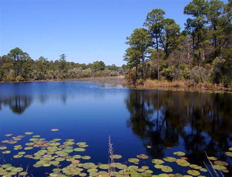freshwater ponds  grayton beach florida jr p flickr