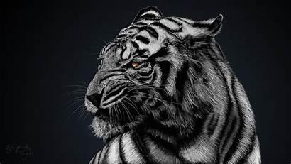 Cool Tiger Wallpapers Tigers Wallpapertag