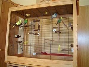 Vogelkäfig Selber Bauen : kaufberatung sittiche seite 2 ~ Lizthompson.info Haus und Dekorationen