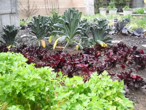 How To Plant A Vegetable Garden In Your Backyard by Maintaining A Vegetable Garden Hgtv