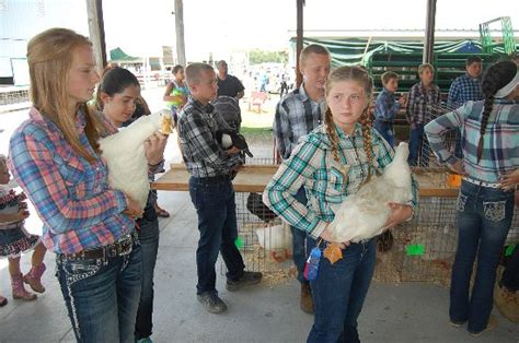 kenosha county fair small animal auction coverage