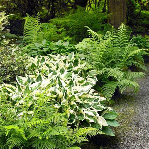 ferns for shade garden pretty shade plantings yard ideas pinterest gardens shade plants and the shade