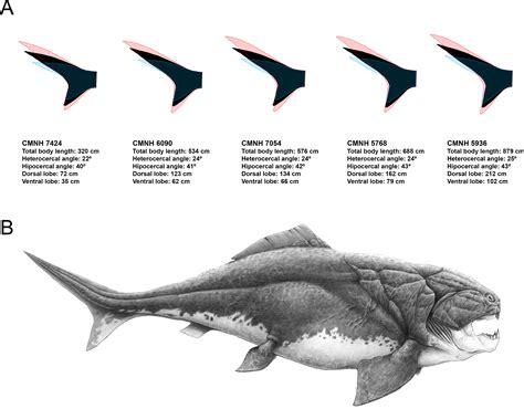 ecomorphological inferences  early vertebrates