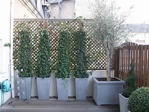 Plantes Grimpantes Pot Pour Terrasse : plante pot exterieur terrasse graines vivaces maison ~ Premium-room.com Idées de Décoration