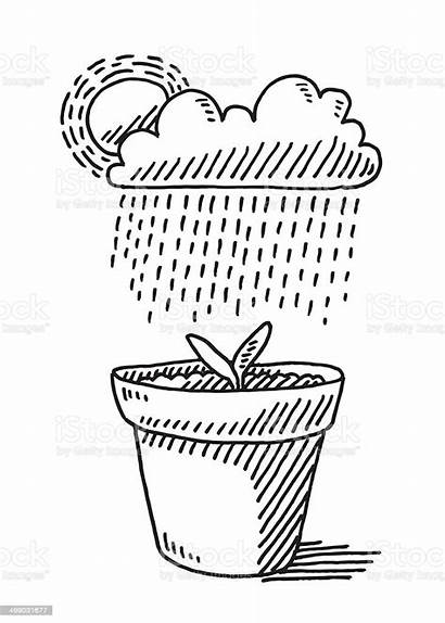 Drawing Plant Rain Pot Growth Cloud Illustration