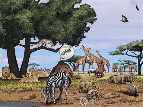 african savanna national geographic society