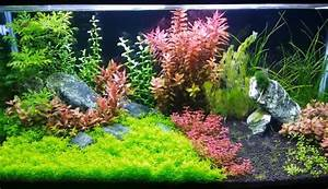 7 Best LED Lights For Planted Tank 2018 Reviews Guide