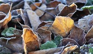 Pflanzen Winterfest Machen : pflanzen winterfest machen ma nahmen ergreifen garten ~ A.2002-acura-tl-radio.info Haus und Dekorationen