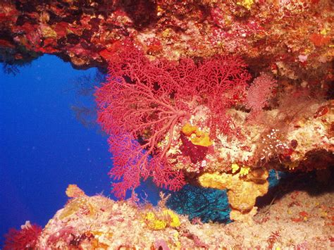 Image result for Beautiful Coral Reefs