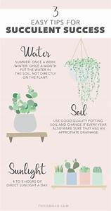 3 Easy Tips For Succulent Success