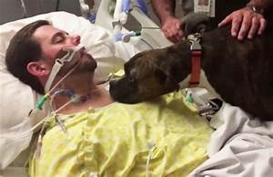 Dog says goodbye to his dying owner in hospital in tear ...