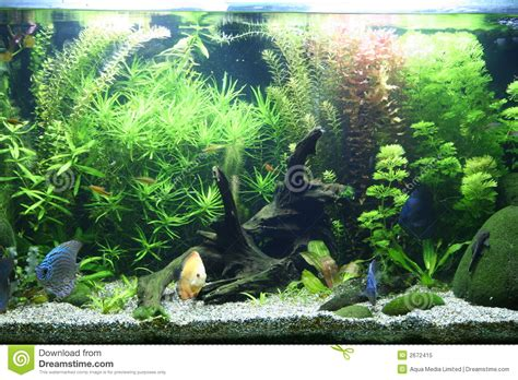 aquarium d eau douce tropical photo libre de droits image 2672415