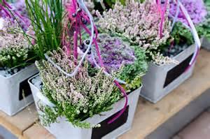 herbst balkon pflanzen herbstblü und blumen für beet und balkon pflanzen breuer