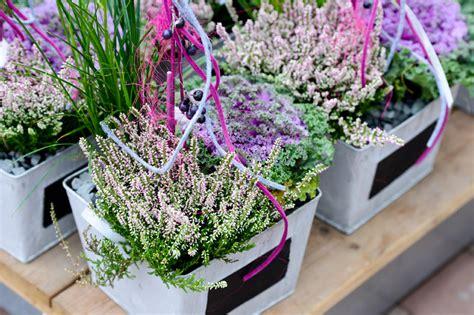 herbstbepflanzung balkon winterhart herbstbl 252 und blumen f 252 r beet und balkon pflanzen breuer