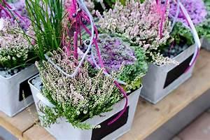 Blühende Pflanzen Winterhart : herbstbl her und blumen f r beet und balkon pflanzen breuer ~ Michelbontemps.com Haus und Dekorationen