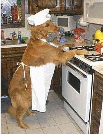 chien cuisiné le chien fait la cuisine image drole publiée le 12