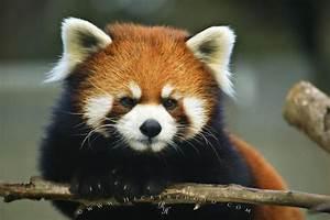 Endangered Animal List | Photo, Information