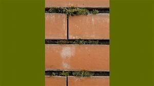 Proteger Le Bas Des Murs Exterieurs : nettoyer et prot ger un mur en briques ~ Dode.kayakingforconservation.com Idées de Décoration