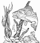 Bass Fishing Clipart Fish Clip Burning Wood Stencils Patterns Drawing Coloring Peacock Pyrography Drawings Fisch Pencil Woodburning Genius Planning Trip sketch template