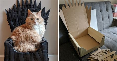 cat owner   cardboard iron throne   maine coon