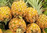 How to ripen pineapple? - Hawaiian Crown