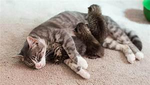 Mamma gatta perde i cuccioli e ne adotta altri tre