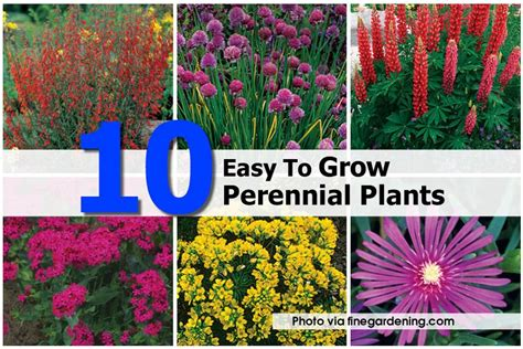 easy growing perennials 10 easy to grow perennial plants