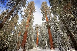 Sequoia National Park MowryJournal com