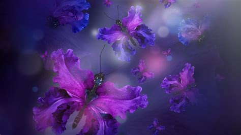 violet wallpapers  images