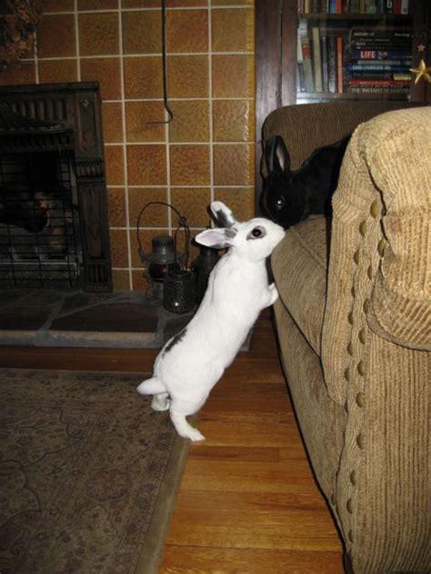 living   house rabbit