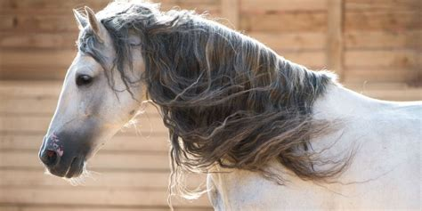 horse expensive most breeds andalusian cost actual prices
