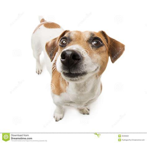 Smiling Dog White Background